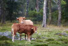 Sommartorkan - 5 tips om hur du kan stötta bönderna