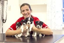 Djurens hjältar veterinären Marie bloggar om första hjälpen.