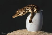 Livets evolution i ny fotoutställning på Naturhistoriska riksmuseet