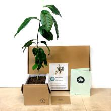 Odla eget inomhusträd med smart trädkit