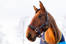 Inför Ryttargalan - årets ridskolehäst utsedd