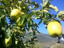Äpfel richtig lagern