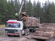 Roads grant to help local timber industry