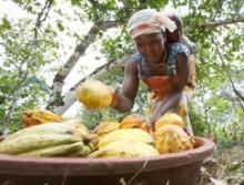 """Nestlé satser på verdens kakaodyrkere med """"The Cocoa Plan"""""""