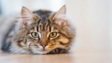 Återkallelse:  Mjau återkallar våt kattmat Mjau Noga Utvalt Mousse med Kalkon 85g