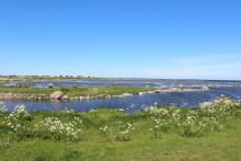 Om 100 år kan 3000 öar ha försvunnit i Stockholms skärgård
