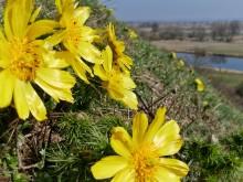 Den Frühling finden