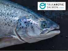 "Cermaq launches brand platform: ""True Arctic - slow raised salmon"""