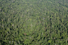 Ny film viser Dayak-stammens kamp mod palmeoliegigant