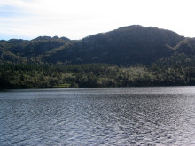 Stort skogsalg i Statskog
