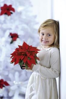 Bästa tipsen för fina julstjärnor!