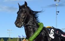 Tar Månprinsen A.M. hem en ny titel på Hästgalan?