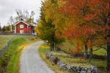 Se naturen rødme i Sverige