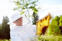 Biodlare satsar på samarbete, mångfald och lokal förankring