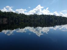 Forskning i Amazonas avslöjar stora metanutsläpp via träd