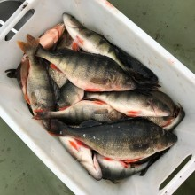 Fisken i Roxen undersöks
