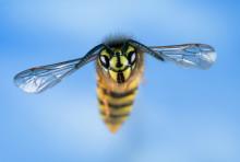 Se till att dina gäster slipper getingar och flugor vid middagsbordet i sommar