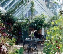 Konsten att vinterförvara växter