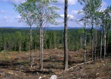 Komplexa drivkrafter bakom skogsbrukets naturvårdsåtgärder - nu syns resultaten