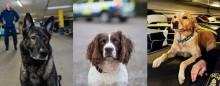 Hittade Kim Walls kvarlevor – nu får de utmärkelsen Årets polishund