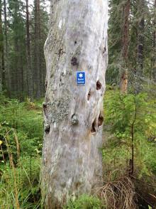Dalarnas äldsta fridlysning av naturminne fyller 100 år