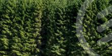 Biometria i samarbete med Academic Work för att digitalisera skogsindustrin