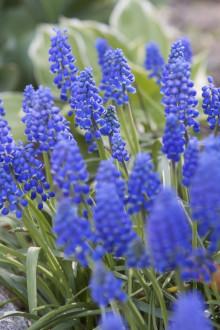 Plan(t)era för vårens pollinatörer nu