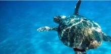 Sopberg hotar Zakynthos havssköldpaddor