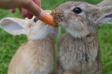Nya mått för kaninburar börjar gälla i juli