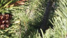 Smart biomass for future materials