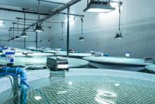 Oppstart av BioMars forskning på fôr ved forskningssenteret ATC Patagonia