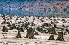 En alliance af internationale organisationer; stop brugen af træbaseret biomasse