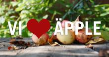 Nu öppnar äppelmottagningen i Herrljunga