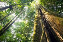 Syv hemmeligheder om skove og træer