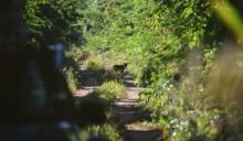 BLOG 3: Jaguar!