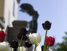Våren är här! Besök Waldemarsuddes park och trädgård för inspiration.