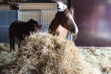 Halmutfodring ger inte hästar magsår