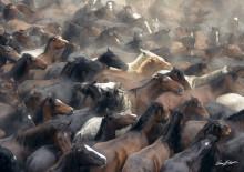 Sjöbo konsthall fylls av hästar
