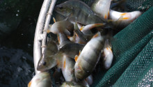 Seminar 21 March: Sustainable Aquaculture at local and global scales