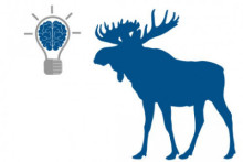 Blue Moose see a rise in productivity post engagement study