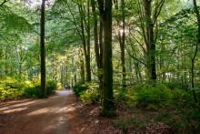 Malmö behöver en ny Pildammspark