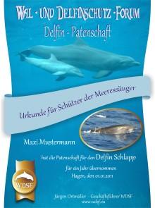 Schützen Sie Wale und Delfine mit Ihrer Patenschaft