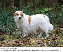 Registreringstatistik för hundar 2008