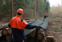 BASF registrerar första skyddsnätet för timmer