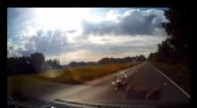 Katso video: Peura törmää autoon täysin yllättäen