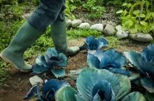Fem tips inför odlingssäsongen!