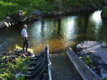 Mer förnybar el i Småland