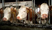 Tierschutzlabels können politischen Gestaltungsmangel nicht ausgleichen