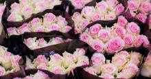 Fler butiker tar ställning för schysst odlade rosor