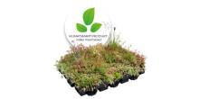 En skön grön nyhet! Växtsystem 🌿 odlad med BIOKOL, nu även för branta taklutningar.